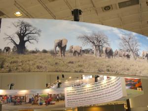 Baobabs und Elefanten, Suedafrika, ITB