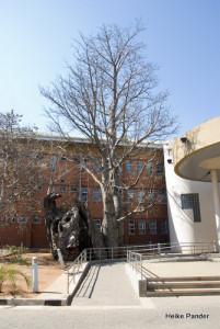 Gefängnis Baobab Kasane I