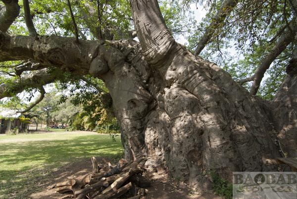 Sunland Baobab, Weinkeller