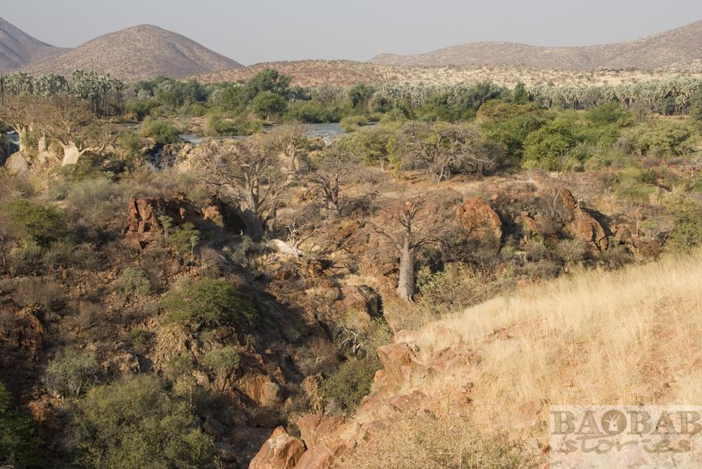 Baobabs am Kunene, Epupa Falls