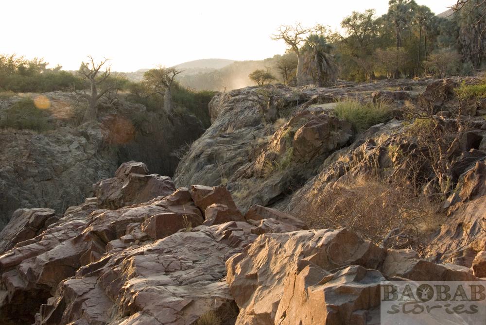 Baobabs, Morgenstimmung, Epupa Falls