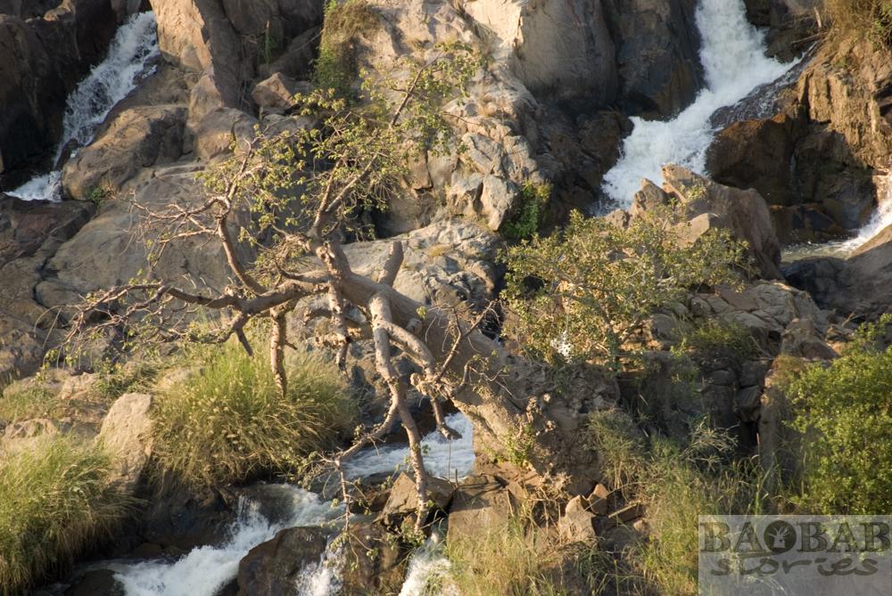 Baobab, gekippt, Epupa Falls