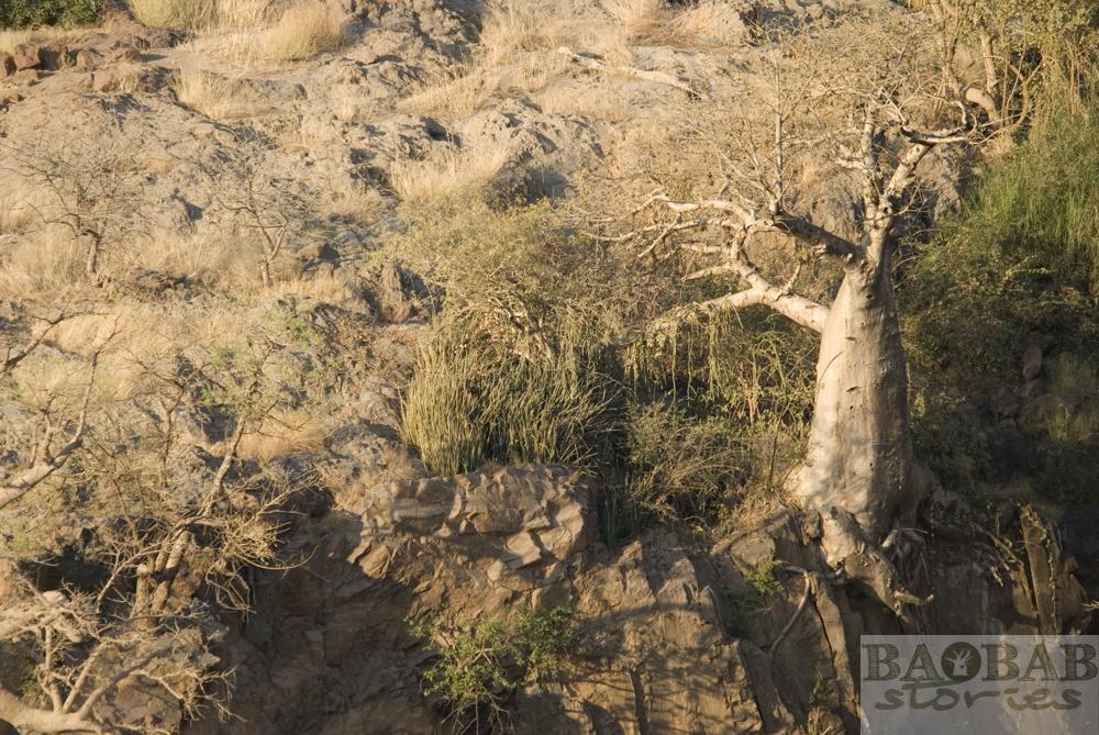 Baobab am Abgrund, Epupa Falls