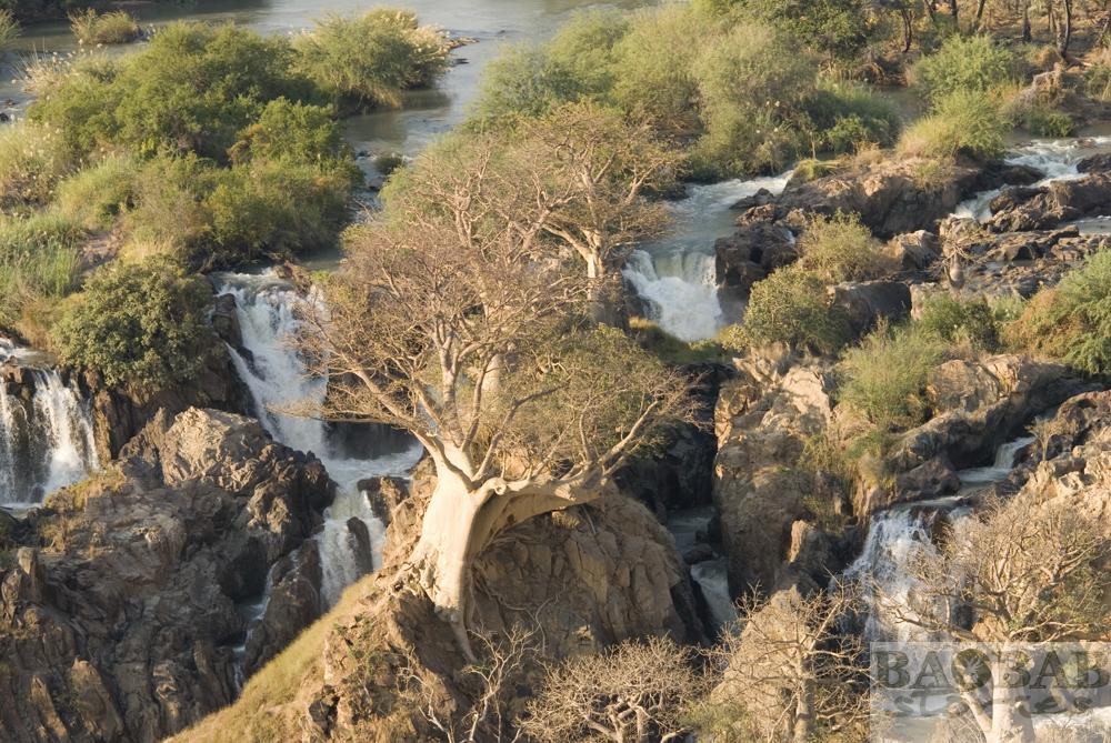 Baobabs am Abgrund, Epupa Falls