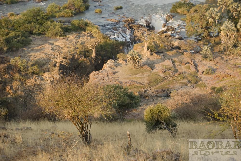 Baobabs von oben, Detail, Epupa Falls