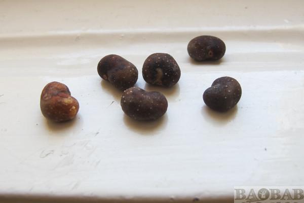Baobab Samen
