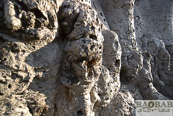 Baobab Rinde