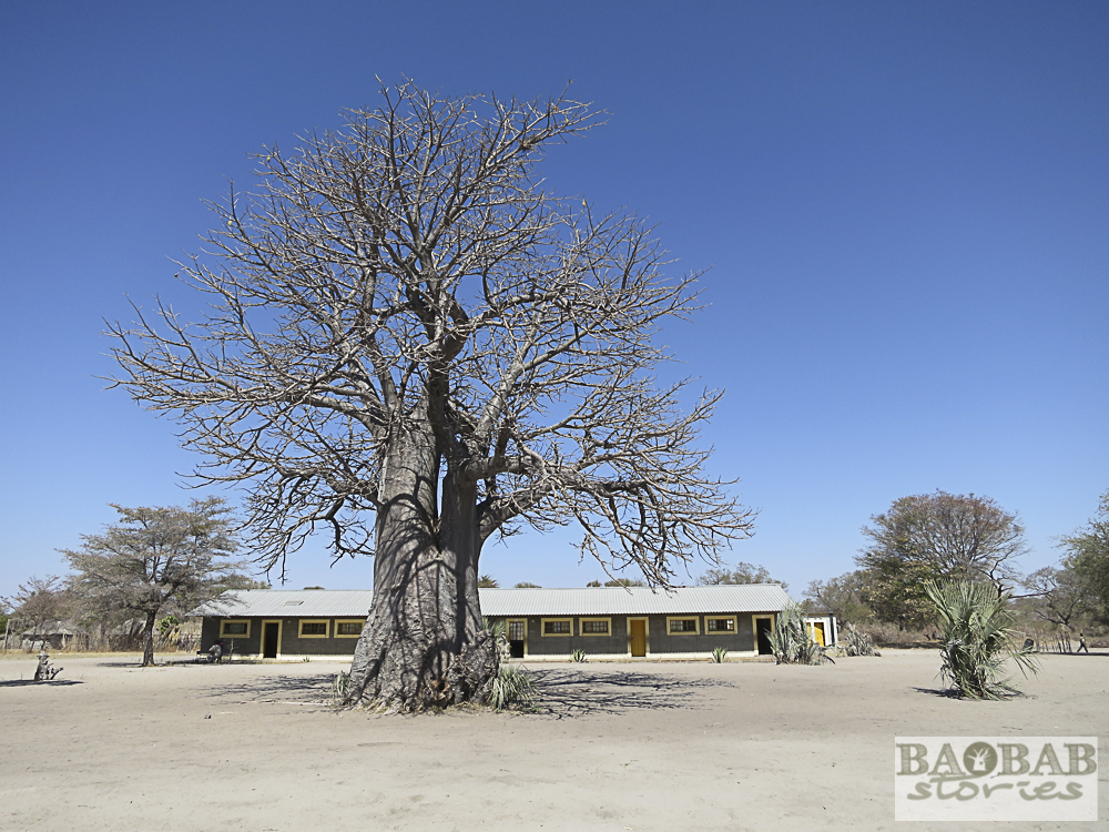 Baobab an Schule, bei Namushasha, Namibia, Heike Pander