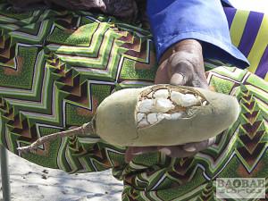 Geöffnete Baobab Frucht, Namibia