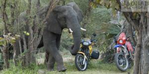 Motorradreise zu Baobabs