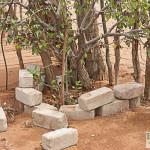 Baobab neben Stützstab