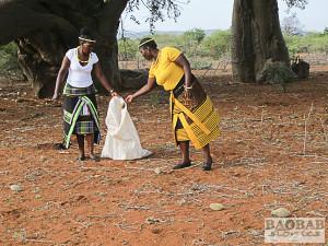 Sylvia Mathoho und Mashudu Rammbasa sammeln Baobab Früchte