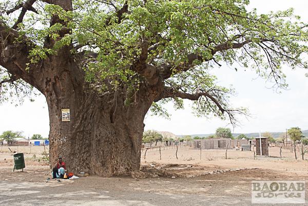 Baobab Orientierungspunkt, Südafrika