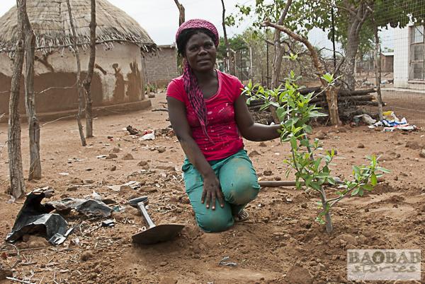 Hutshilo Munyai mit Baobab Setzling