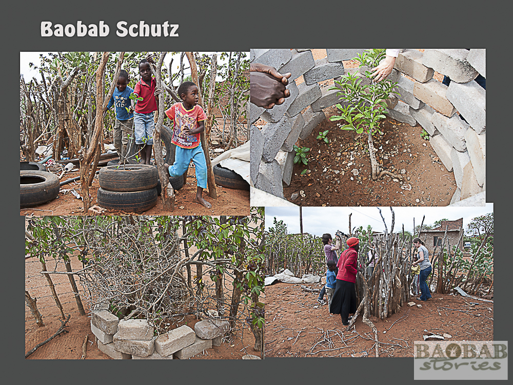 Baobab Schutz