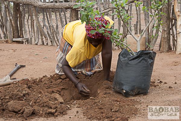 Baobab Hüterin hebt das Loch aus