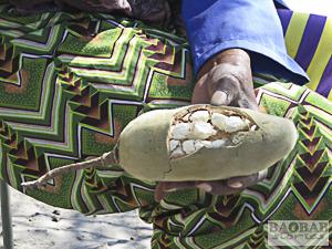 Aufgebrochene Baobab Frucht