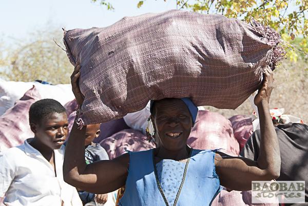 Baobab Fruchtsammlerin