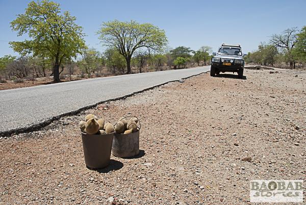 Baobab Früchte, Straßenverkauf, Simbabwe