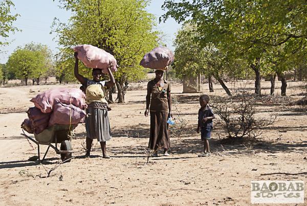 Baobab Sammlerinnen