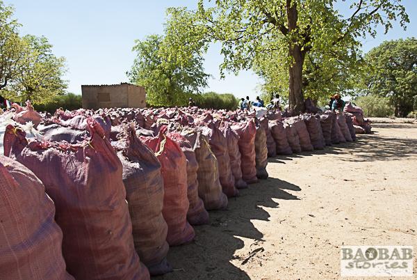 Baobab Sammelstelle, Simbabwe