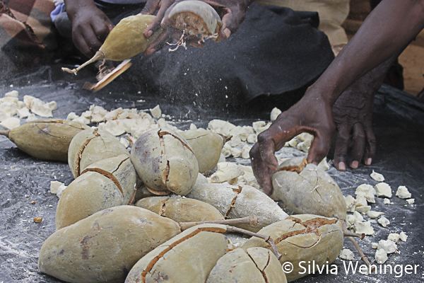 Geknackte Baobab Früchte