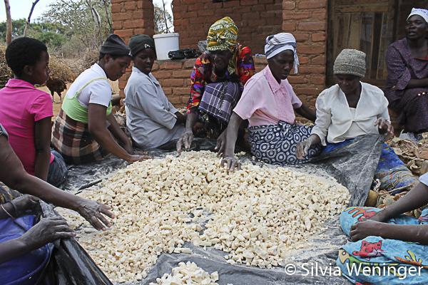 Herausgelöstes Baobab Fruchtpulver
