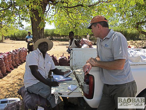 Aufkauf von Baobab Früchten, Sammelstelle