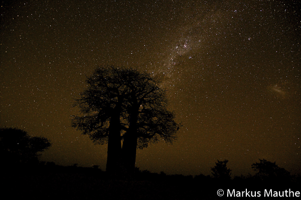 Baobab mit Sternenhimmel, Markus Mauthe
