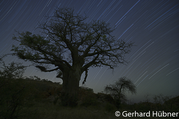 Baobabs in Mapungubwe, Südafrika, Gerhard Hübner