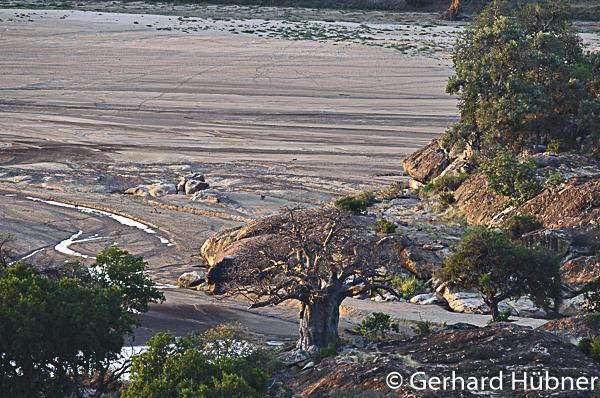 Baobab in Mapungubwe, Südafrika, Gerhard Hübner