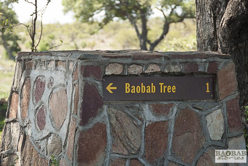 Wegweiser zum Baobab südlich von Satara, Krüger NP, Südafrika