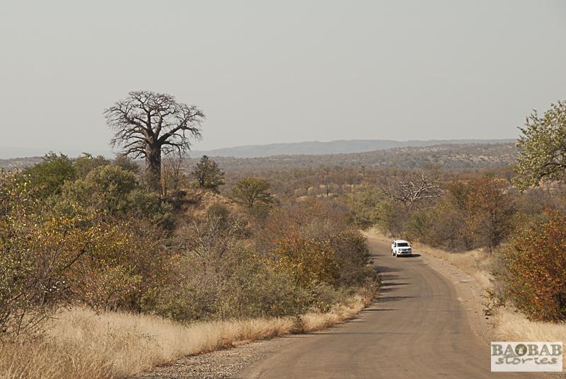 Baobab Hill, Krüger NP, Südafrika