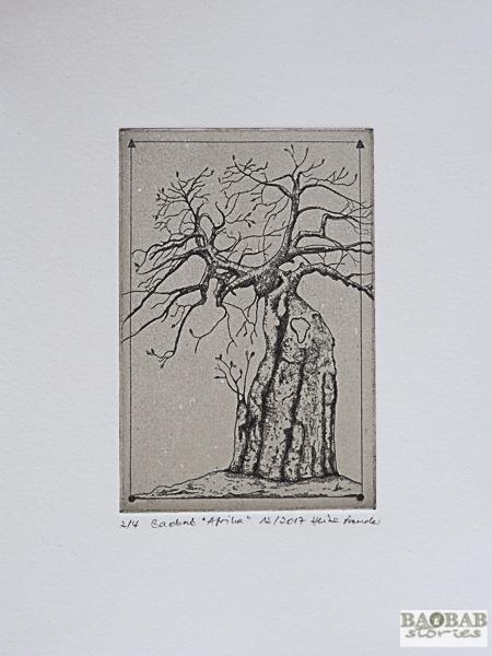 Baobab Africa