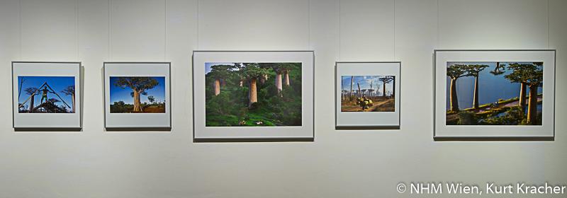 """Baobab Fotografien von Pascal Maître in der Ausstellung """"Baobab der Zauberbaum im NHM, Wien"""