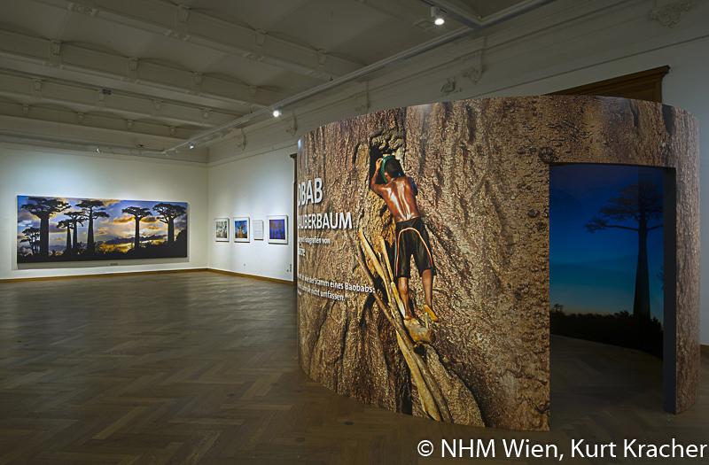 """Baobab-Konstruktion in der Ausstellung """"Baobab der Zauberbaum im NHM, Wien"""
