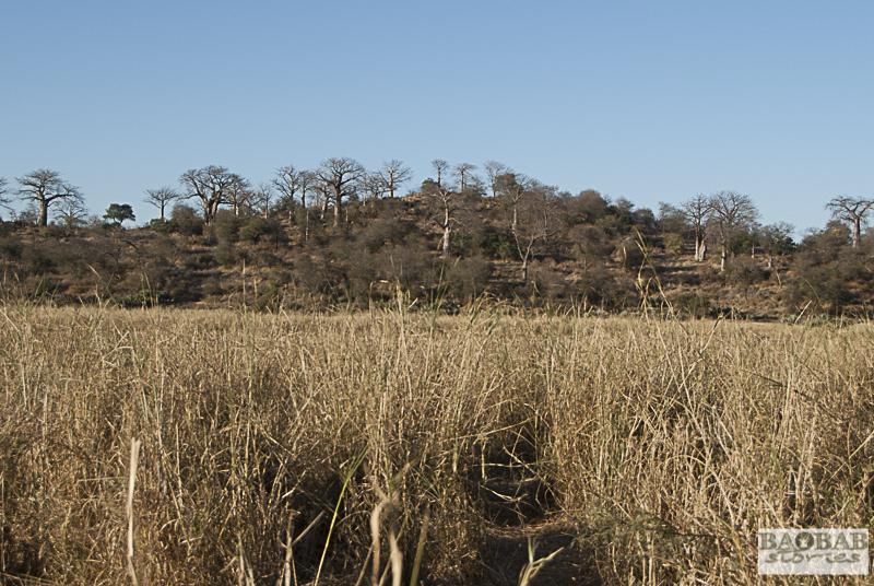 Baobab Hill Makuleke