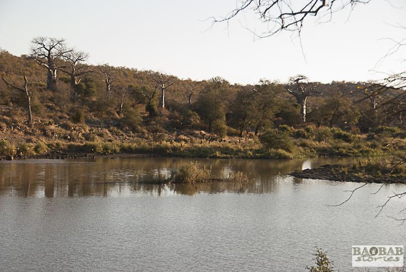 Baobabs_Makuleke
