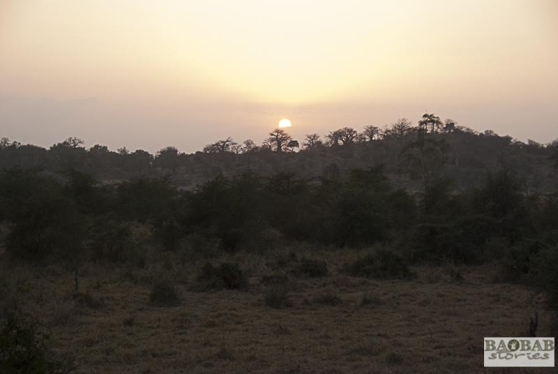 Baobab Hill
