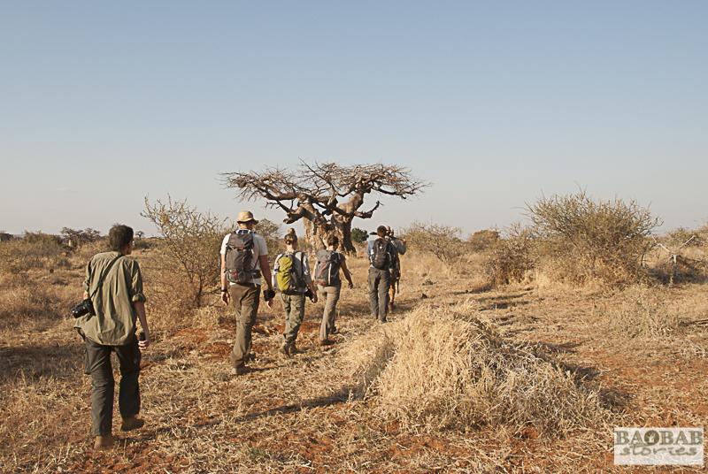 Wanderung in der Wildnis, Mashatu, Botswana