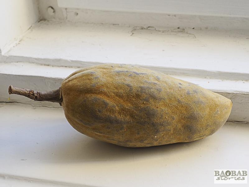 Baobab Deko: länglich-ovale Frucht, südliches Afrika