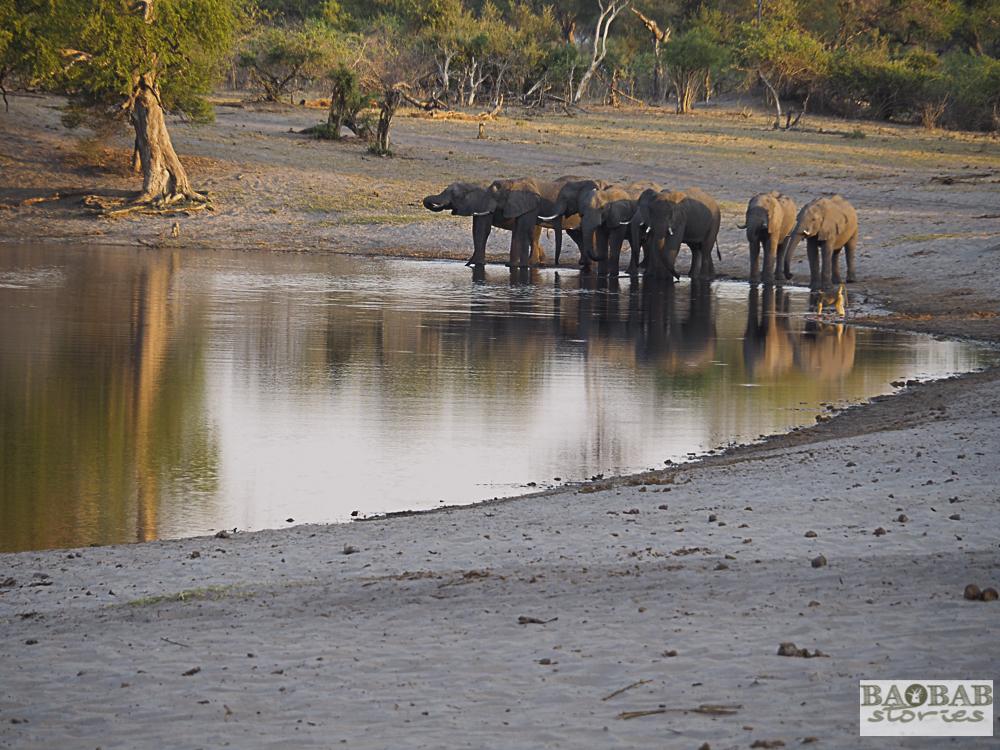 Elefanten, Bwabwata NP, Namibia, Heike Pander