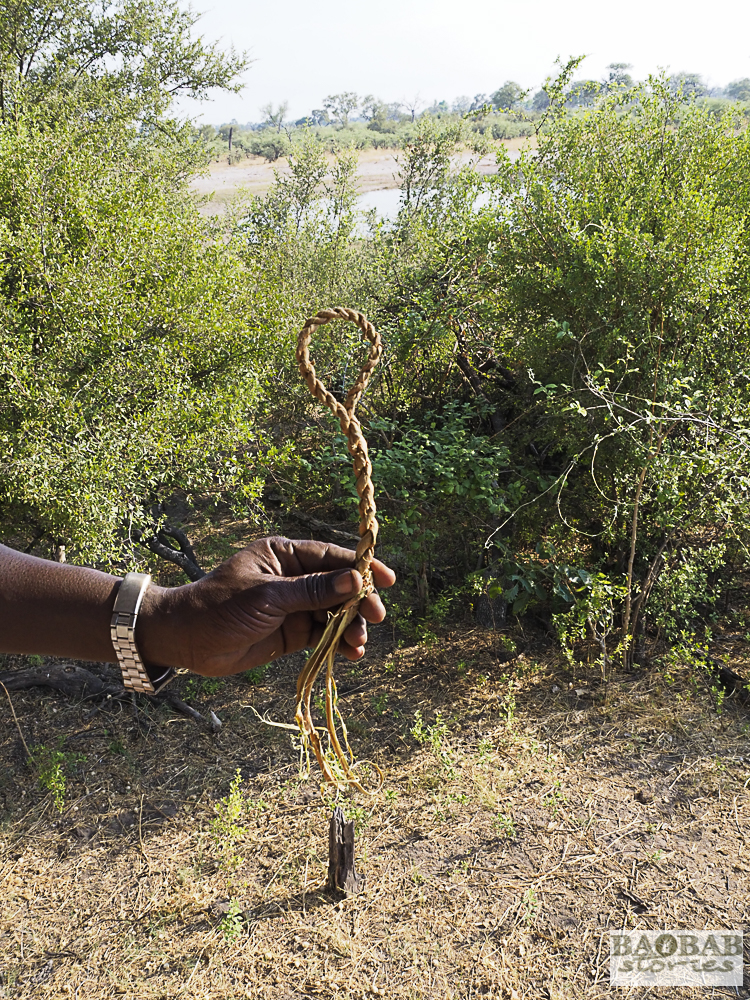 Schlinge, geknüpft von Eustace Libulelo, Bwabwata NP, Namibia,