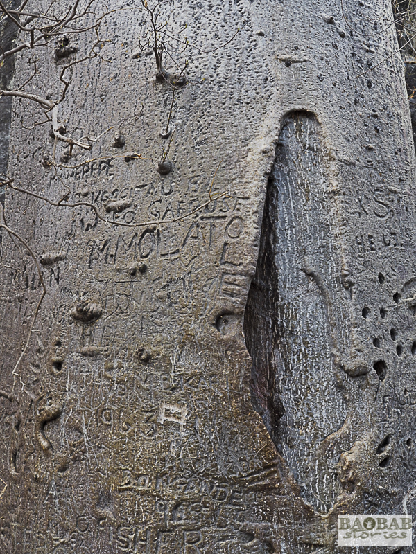 Baobab, Tsodilo Hills, Botswana, World Heritage Site, Heike Pander