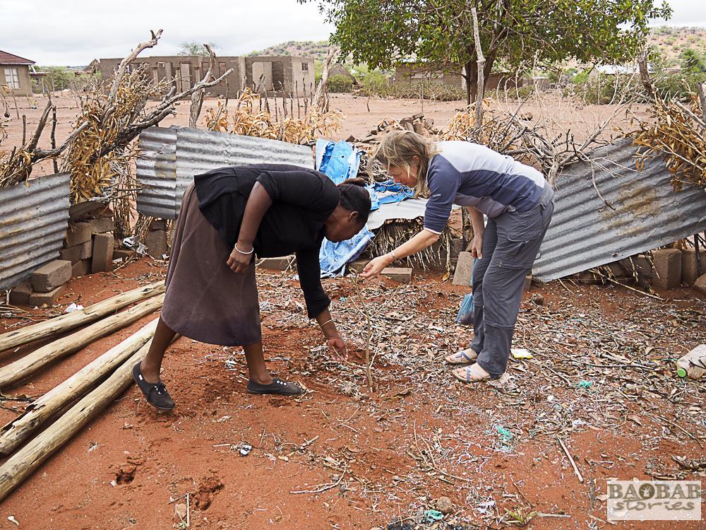 Evelina Tshitete u. Dr. Sarah Venter begutachten Baobab, Heike Pander